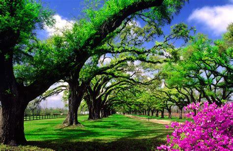 imagenes de paisajes jardines fondo pantalla paisaje jard 237 n dise 241 o pinterest fondo