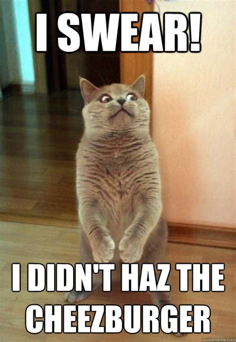 Cheezburger Meme - i swear i didn t haz the cheezburger cat meme cat