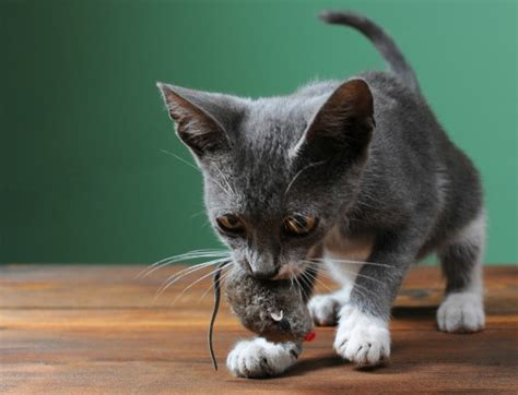 cat bring  gifts  conscious cat