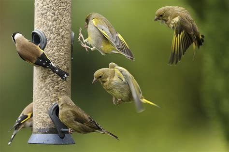 common bird feeding myths busted the truth unraveled