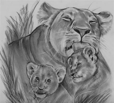 lioness and her cubs drawing by barb baker