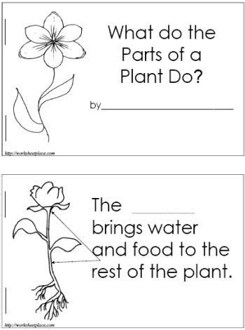 Galerry free printable plant parts