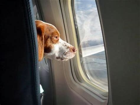 airlines that allow dogs most pet friendly u s airlines tails of the city