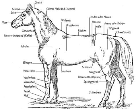 Schemel Englisch by Tageskurs Quot Anatomie Der Pferde Quot