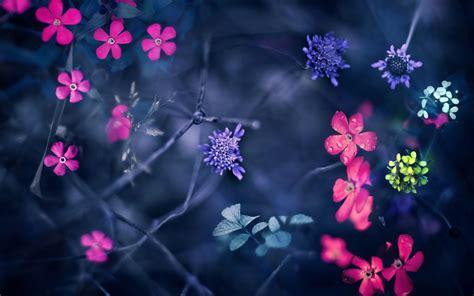 imagenes wallpapers flores fondos de pantalla de flores rosadas moradas blancas
