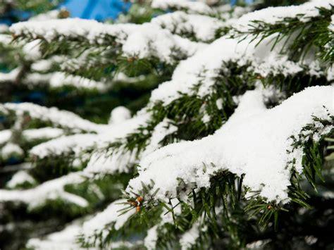 weihnachtsdeko ohne weihnachtsbaum benited com