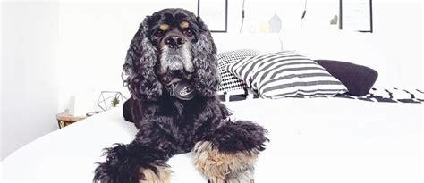 hund im schlafzimmer einem hund beibringen wo sein platz ist tierisch wohnen