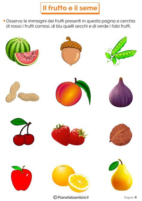 il fiore scuola primaria il frutto e il seme schede didattiche per la scuola