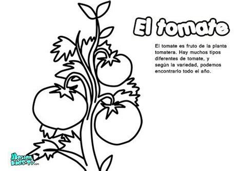 imagenes educativas para niños para colorear dibujos colorear para ni 241 os el tomate educativos frutas