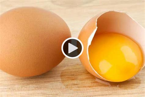 Bibit Ayam Telur Siap Telur mengintip proses anak ayam menetas tanpa cangkang money id