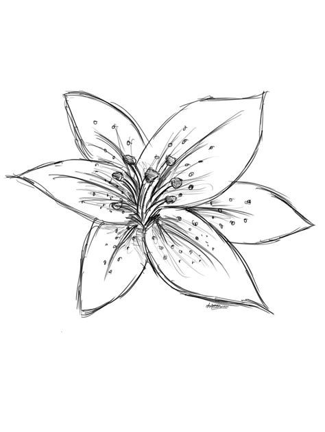 A Drawing Of A Flower by Tiger Drawing Canvas In 2019 Lilies Drawing