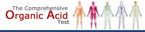 Comprehensive Stool Test For Candida by Candida Overgrowth Best Home Lab Tests Drjockers