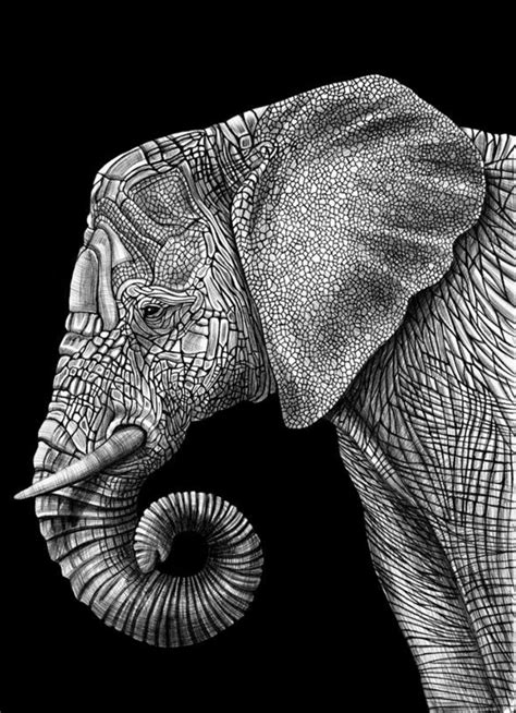 1001 + photos de dessin noir et blanc qui vont vous aider