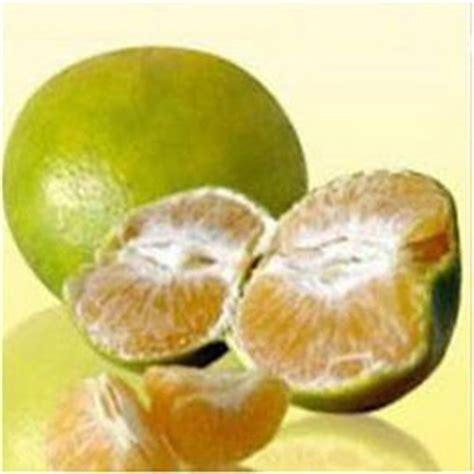 Tanaman Jeruk Siam Pontianak Diskon jeruk siam asy syifa jeruk jeruk pontianak ternyata