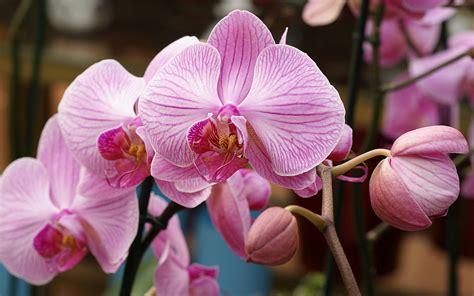 imagenes de rosas orquideas fotos de orquideas rosas y tulipanes altisima