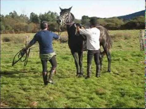 httpgozando mujer y caballo doma de caballos youtube