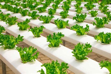 built  diy hydroponic system  hydroponic garden