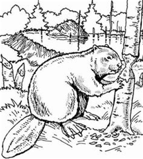 beaver drawings printable coloring page beaver