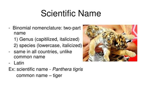 what is the scientific name of ppt chapter 17 classification powerpoint presentation id 6804720