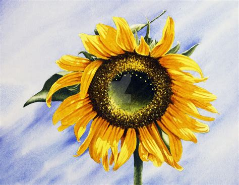sunflower watercolour painting by thelastcelt on deviantart