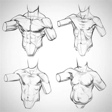 Drawing Anatomy by What Are The Fundamentals Of And How To Learn Them