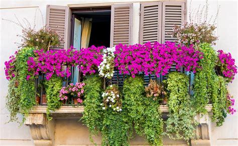 piante fiorite da balcone piante da balcone pendenti foto benessere leonardo it