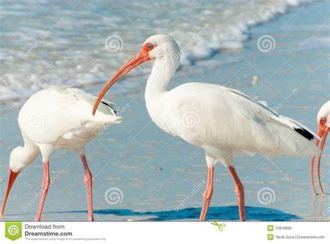 matelic image birds of florida identification