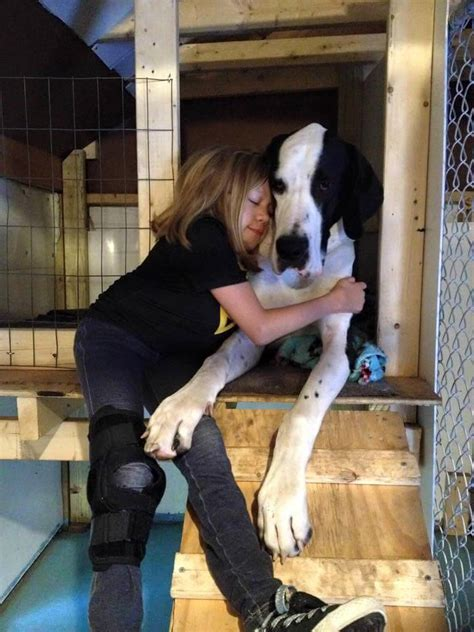 great dane service service who helps walk again gets best day doggies care