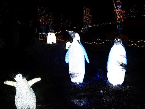 zoo lights chicago lincoln park zoolights at lincoln park zoo