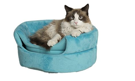 cat beds petsmart cat beds covered heated cat beds petsmart
