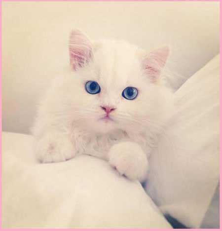 imagenes de gatitos blancas tiernas imagenes de gatitos tiernos y lindos