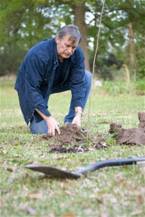 fruit tree planting guide planting guide for fruit trees