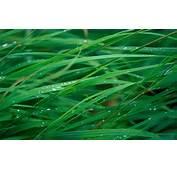 Wallpaper Grass 5k 4k OSX Green Dew OS 168