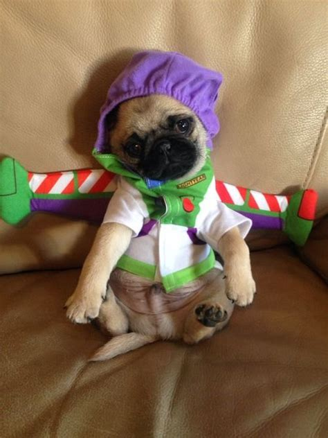 pug addiction picture ideas 10 handpicked ideas to discover in photography