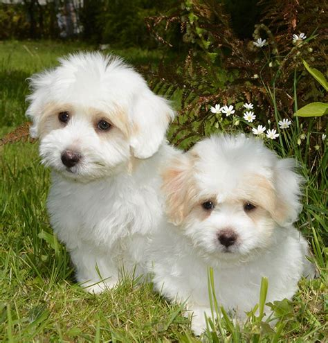 theme names for dog litters runt of the litter health problems and caring for runt
