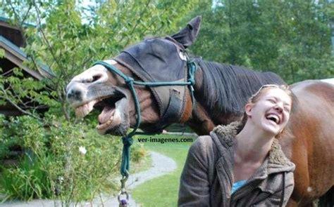 fotos animales riendose imagen de 191 quien ha dicho que los animales no se r 237 en