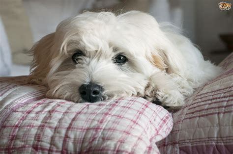 dogs in bed 10 calming tips for anxious dogs pets4homes