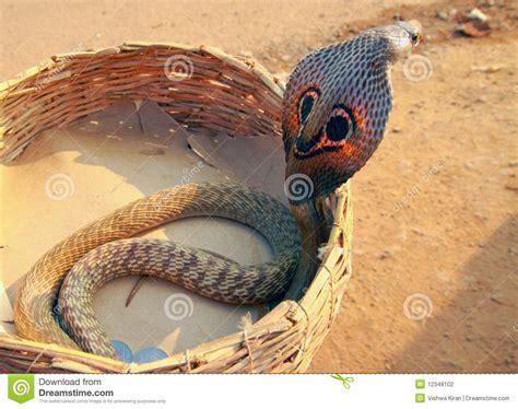 crbra in casa eine kobra in einem korb stockfoto bild melodie