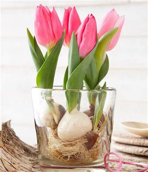 tulpen im glas tulpen im portr 228 t pflegetipps und dekoideen living at