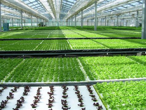Greenhouse Windows by Hydroponics And Greenhouses Grow Bigger And Better With No