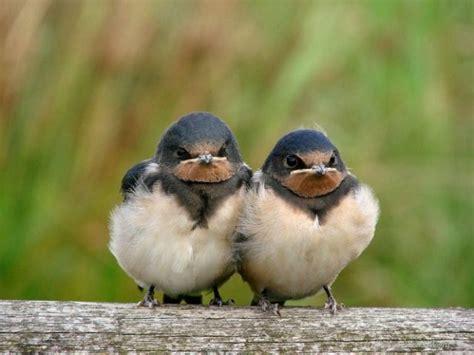 imagenes animales divertidos fotos de animales graciosos
