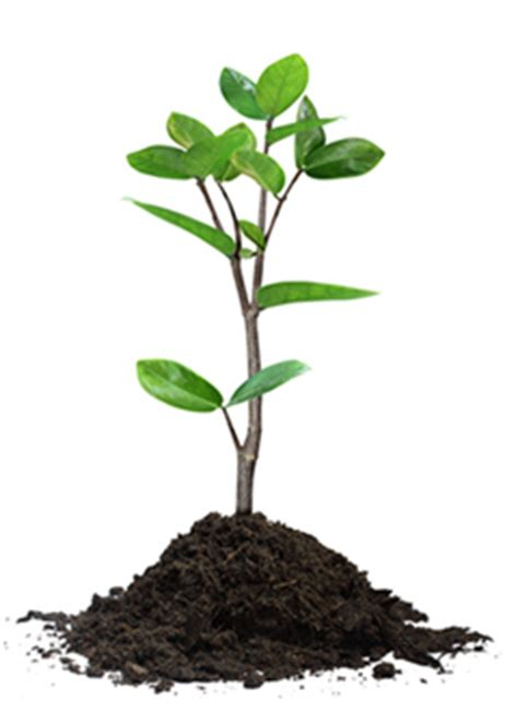 Tree Plant - tree advocacy planting program secured courier