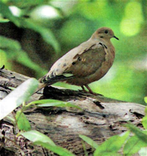 isla de mona de puerto rico florafauna datos fauna de puerto rico aves autoctonas datos y videos