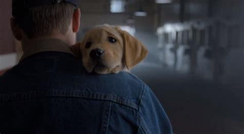 budweiser puppy commercial 2013 budweiser ปล อยโฆษณาเด ดกลาง bowl