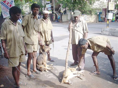 how often do dogs need rabies contact 171 global wildlife resources inc