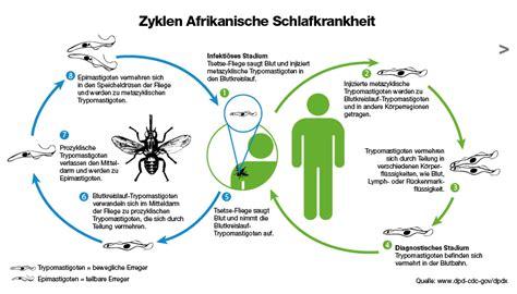 Pharmaceuticals Bayer Afrikanische Schlafkrankheit