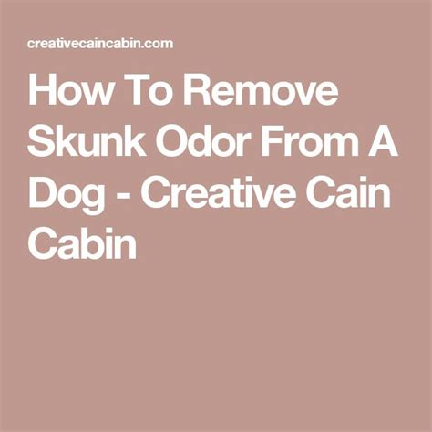how to remove skunk smell from 1000 ideas about skunks on baby skunks skunk pet and bears