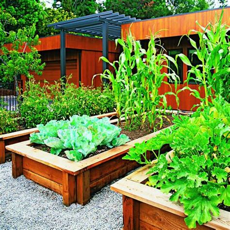 Best Vegetables To Grow In Raised Beds by 17 Best Images About Front Yard Vegetable Garden On