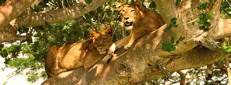 parc national queen elizabeth 3 days queen elizabeth national park safari tour uganda
