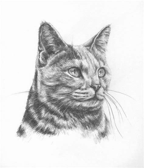 Cat Pencil photo to portrait beautiful cat portraits in pencil